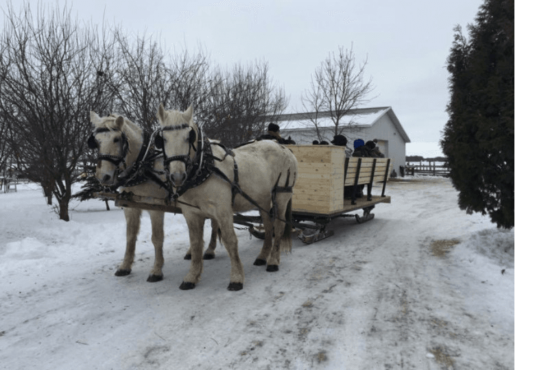 Horses pulling a wagon for a sleigh ride