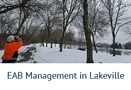 EAB Management in Lakeville
